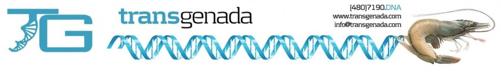 TransGenada Corporate Letterhead with Shrimp+DNA logo
